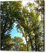 Tree Arches At Clackamette Park Acrylic Print