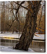 Tree At Collins Creek 2 Acrylic Print