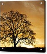 Tree At Golden Sunrise Acrylic Print