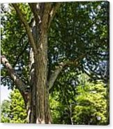 Tree At Msu Acrylic Print