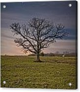 Tree At Night Acrylic Print