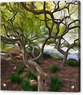 Tree At Norfolk Botanical Garden Acrylic Print