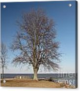 Tree At Sandy Point Acrylic Print