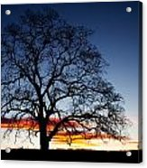 Tree At Sunrise Acrylic Print