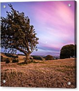 Tree At Sunset Acrylic Print by John Farnan