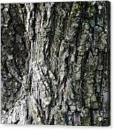 Tree Bark 2 Acrylic Print