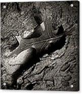 Tree Bark And Leaf Acrylic Print