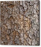 Tree Bark Background Texture Acrylic Print