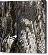 Tree Bark No. 3 Acrylic Print
