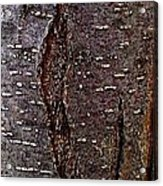 Tree Bark To The Left Acrylic Print