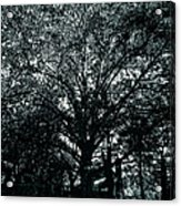Tree Black And White Acrylic Print