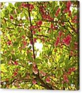 Tree Blossom 1 Acrylic Print