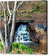 Tree By The Brook Acrylic Print