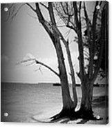 Tree By The Sea Acrylic Print
