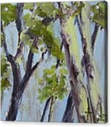 Tree Canopy Acrylic Print