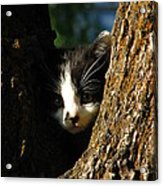 Tree Cat Acrylic Print