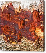 Tree Closeup - Wood Texture Acrylic Print