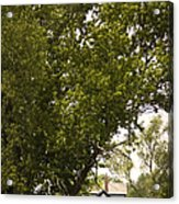 Tree Covered Acrylic Print