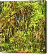 Tree Covered Road Acrylic Print
