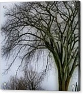 Tree Elder Acrylic Print
