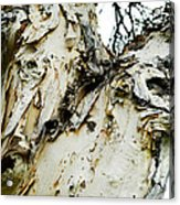 Tree Face Color Acrylic Print by Lisa Cortez
