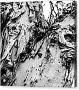 Tree Face No Color Acrylic Print