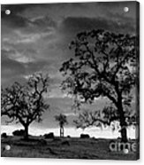 Tree Family In Black And White Acrylic Print