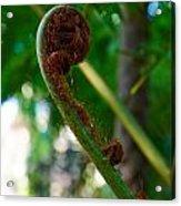 Tree Fern Acrylic Print