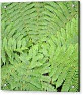 Tree Fern (ponga Acrylic Print