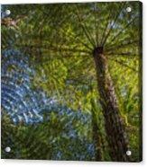 Tree Ferns From Below Acrylic Print