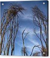 Tree Fingers Acrylic Print