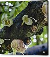 Tree Flowers Acrylic Print