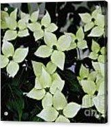 Tree Flowers Acrylic Print