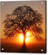 Tree Fog Sunrise Acrylic Print