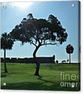 Tree Fort Acrylic Print