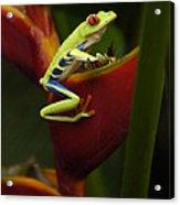 Tree Frog 3 Acrylic Print by Bob Christopher
