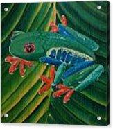 Tree Frog Koi Acrylic Print