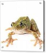 Tree Frog Ready To Jump Acrylic Print