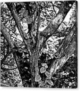 Tree Giant Acrylic Print
