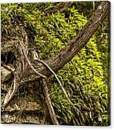 Tree Grows From Rock Outcrop Acrylic Print