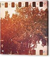 Tree Grunge Vintage Analog Film Acrylic Print