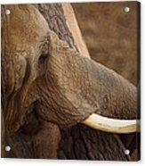 Tree Hugging Elephant Acrylic Print