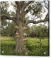 Tree Hugging Green Ecological Concept  Acrylic Print