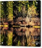 Tree Impressions Acrylic Print