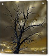 Tree In A Storm Acrylic Print