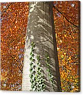 Tree In Autumn Acrylic Print