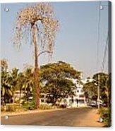 Tree In Goa Acrylic Print