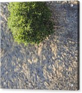 Tree In Grass From Balloon Acrylic Print