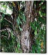 Tree In Kauai Acrylic Print