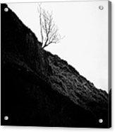 Tree In Mist II Acrylic Print by John Farnan